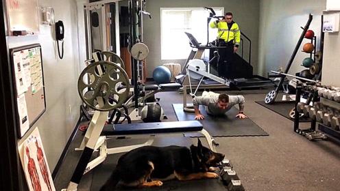 警犬看到警察在做俯卧撑,接下来竟然跟着学了起来,看完忍住别笑!