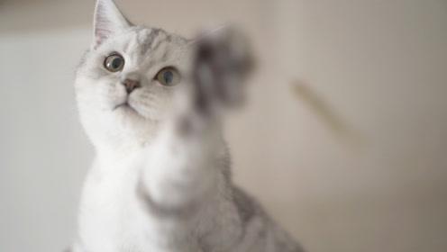什么能让猫咪疯狂,还一分钱不花?