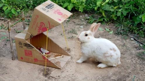 捕兔小陷阱,你学会了吗?