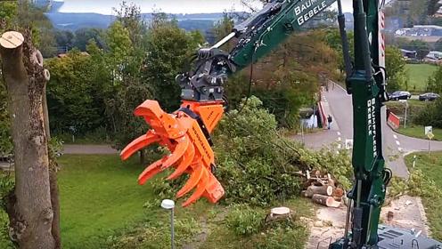 国外最先进的砍树机器,几秒钟就能砍掉一棵树,真是太厉害了!