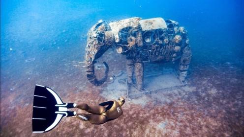 世界最美妙两大潜水圣地,精美绝伦的画面让人神思所往