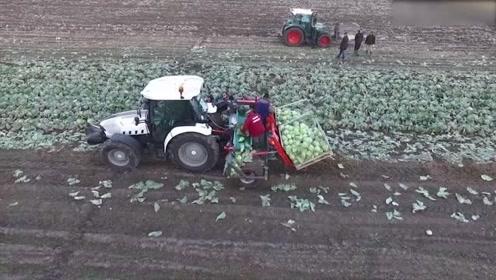 美国发明的现代化农业机械,蔬菜收割机真先进,农民伯伯的福音