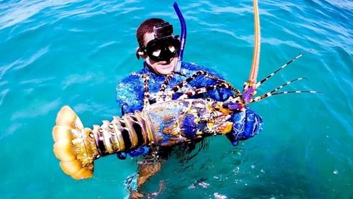潜入海底徒手捕大龙虾,一只就有好几斤,最好的吃法太土豪了