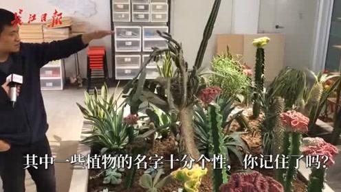奇特!马桶刷、光棍树,竟有植物叫这名字