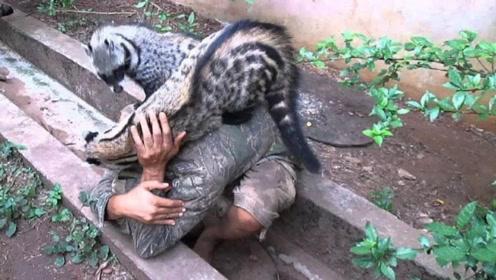 澳洲最残暴的动物,每年杀死上亿只动物,政府怒砸180亿消灭
