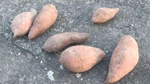 保存红薯有妙招,学会这招,放一年都不会发霉发芽,太厉害了