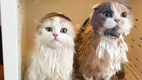 一个烘干箱到底能装下几只猫咪?猫:我真的只是毛茸茸