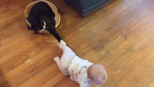 当猫咪和宝宝在一起的时候,真的是太有爱了,超级可爱的!