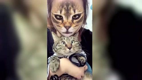 当猫看到特效里的主人