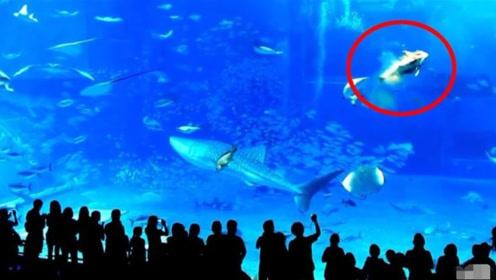 水族馆里一条剑鱼,突然猛的撞向玻璃自杀,背后原因令人深思!