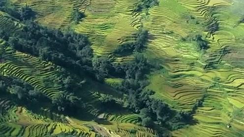 你们看到的是美景,我看到的是艰辛,不知道农民们付出了多少辛勤的汗水!