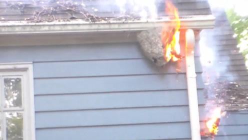 """男子点炮""""火烧""""马蜂窝,下一秒出现意外,真不怕连房子都烧掉!"""