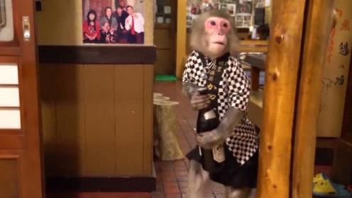 日本最特殊的餐厅服务员,一天只做两小时,吸引了大量食客围观