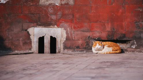 """故宫这么大,为什么一只老鼠都没有?专家:里面住着一群特殊""""客人"""""""