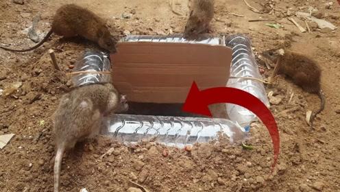 还可以这样抓老鼠?这个捕鼠器脑洞大开!