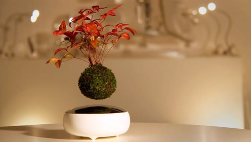 能飘在空中的盆栽你见过吗?这年头连植物都能玩悬浮了!活久见