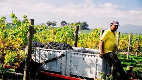 去澳洲当农民年薪60万 还有机会一步到位拿PR