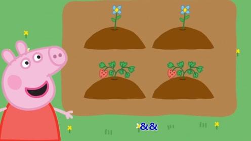 快乐英语:小猪佩奇花朵有几种颜色呢?书适优阅儿童英语