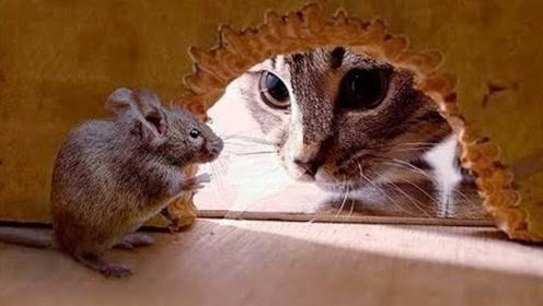 为什么老鼠满身病菌,猫吃老鼠却不会生病?看完实在佩服