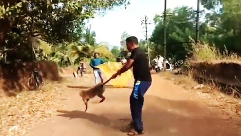 猴子屡次进村捣乱,村民忍无可忍,把猴子抓起来空中狂甩3600度!