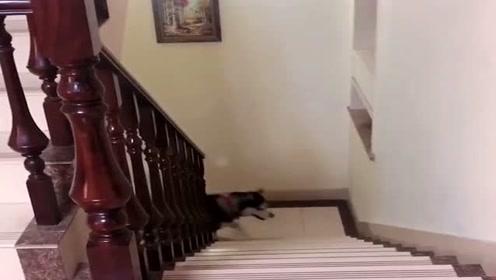 狗狗不愿起床,看主人说了什么令它改变了主意,下一幕太扎心了!