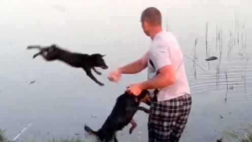 主人在河边钓鱼,俩狗子竟然打了起来,接下来主人的做法忍住别笑