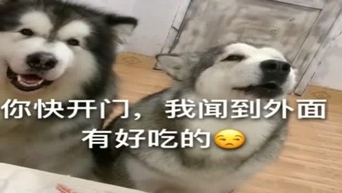 铲屎官睡懒觉,狗狗不乐意了,看它任性的模样都忍住别笑!