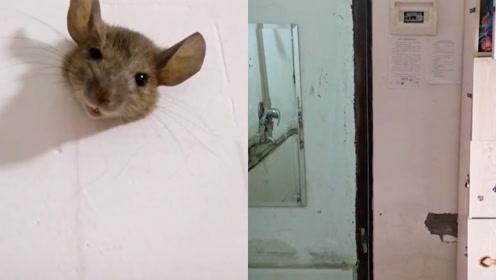 网友发现墙上长出超萌老鼠头,得知原因胖子吓得瑟瑟发抖