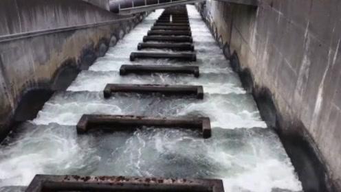 人类发明并建设了鱼梯,不得不佩服,实在是太聪明了!