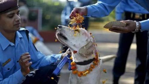 尼泊尔最特别节日,节日主人在街上随处可见,网友:喜欢和爱差了一个尼泊尔