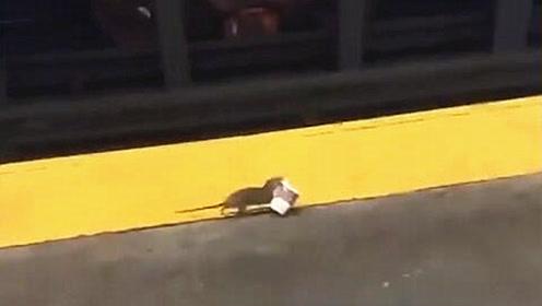 地铁见老鼠端咖啡狂奔 网友调侃:实习生吗