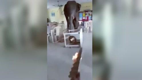 饥饿大象冲进军营餐厅 被工人用火把驱赶后仓皇而逃