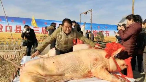 """502斤肥猪获评""""猪王"""",头戴红花被现场宰杀"""