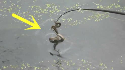 小伙钓鱼意外钓到这货,怎么都甩不掉,这下惨了!