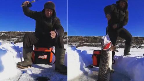 男子湖中冰钓鱼线突然变沉 拉出一看没成想竟是1米长大家伙