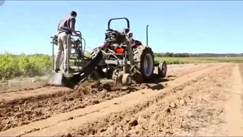 玉米地里的地膜回收操作,老外这农机太好用了