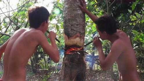 柬埔寨独特砍树方式,不用锯子全靠嘴,这场面从没见过!