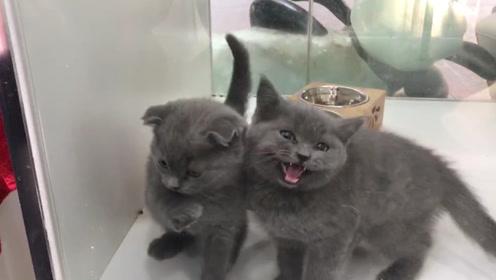 """花5000块买猫几日后查出得猫瘟 市民怀疑买到""""星期猫"""""""