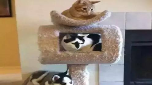 眼力测试:图中只有3只猫吗?不太对,有卧底
