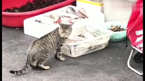 猫仔你成精了,还知道放风,这鱼给你偷得真有水平!