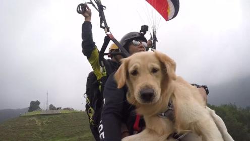 国外小伙玩滑翔伞,还带着自家狗狗一起,狗狗一脸拒绝