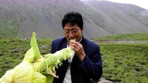 """西藏高原上的""""巨型白菜"""",比雪莲还珍贵,有钱都买不到"""
