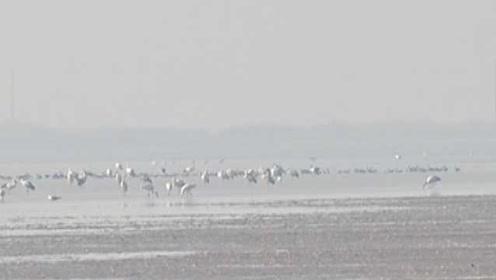 为鼓励留住候鸟,鄱阳湖保护区补贴渔民:候鸟越多奖励越大
