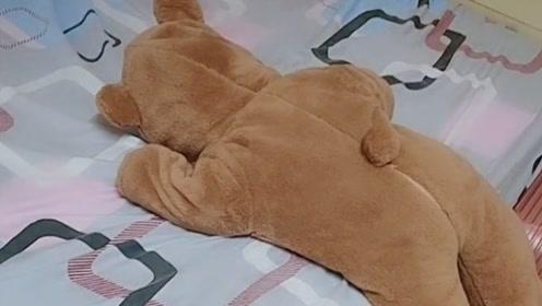 乍一看以为是个玩具熊,翻面一看……心都要化了!