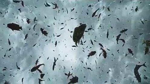 """世界上最奇怪的天气,天空下起了""""鱼雨"""",数万条鱼从天而降!"""