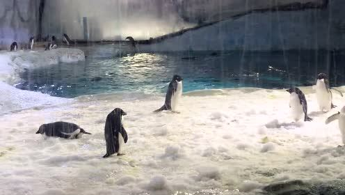 亲子游珠海海洋王国看企鹅宝宝卖萌