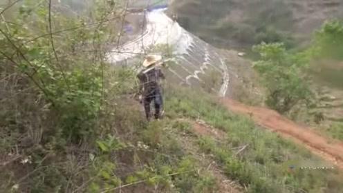 农村大山里的野山药,好吃大补,为此小伙挖了1米5的深坑