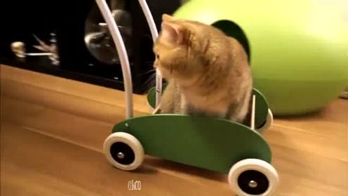 主人专门为爱猫做个小推车,瞄星人喜欢的不舍得下来,看着好兴奋
