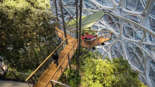 亚马逊办公楼比苹果更牛,花40亿逗员工开心,把热带雨林搬了进来