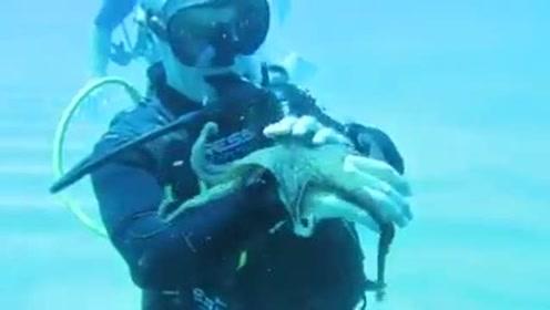 大海里的章鱼在他手上就像只乖巧的猫咪,原来章鱼也可以这么可爱